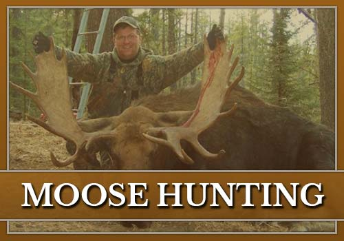 Moose Hunting with Misty River Outfitters
